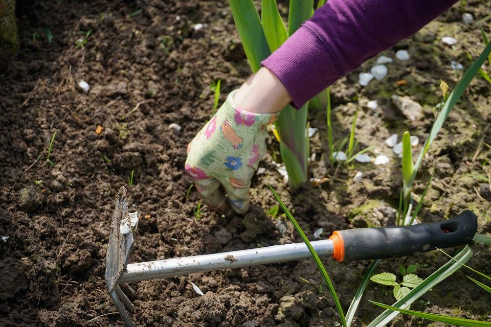庭園 庭 採掘 ハ雑草 除草 植え付け ツール 地球 植物 春 自然