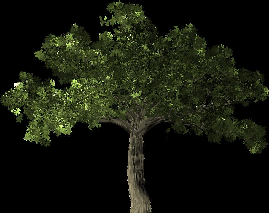 イチジク属 ツリー 植物 ガジュマル バンヤン 中国のガジュマル マレーガジュマル