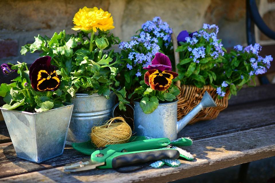 庭 花 植物の花 ガーデニング スプリング 私を忘れる 庭師 銀行 趣味職人さん