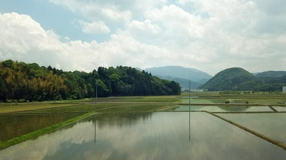 米 フィールド 日本 農業 植物 自然 農村 田舎 アジア 文化 環境 風景 緑