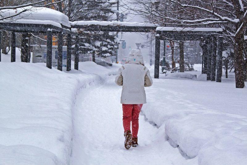 冬 雪 美しい 公園 ツリー 朝 雪マント ホワイト グレー 徒歩 風 女性 冷